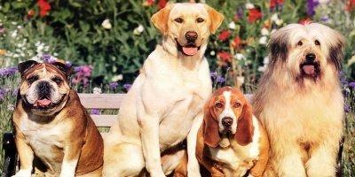 esposizione canina cosenza