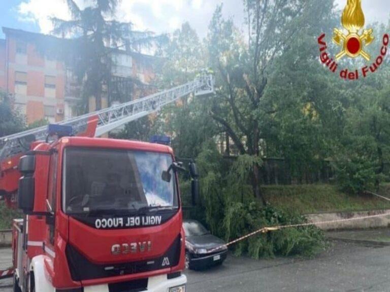 Grosso albero s'abbatte su strada, tragedia sfiorata a Cosenza
