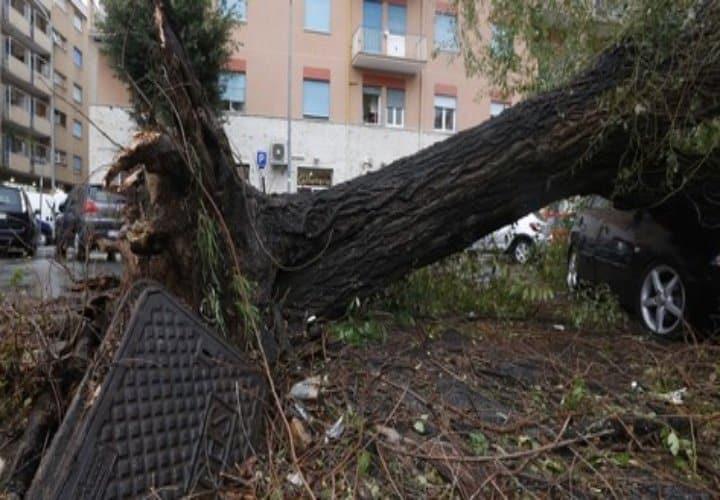 SOS maltempo, Calabria flagellata. Alberi abbattuti e tetti divelti