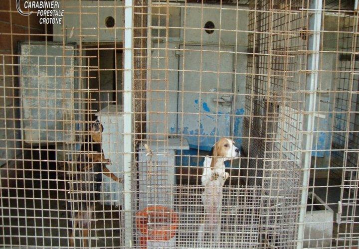 Scoperto canile abusivo nel crotonese, una denuncia