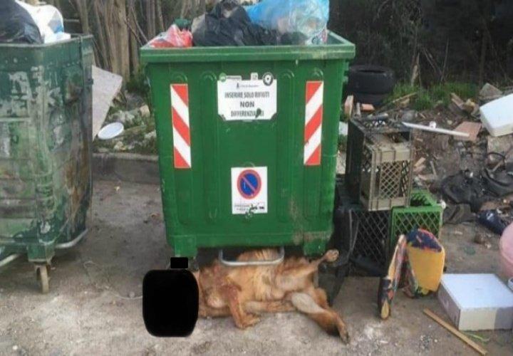 Corigliano Rossano: cane morto trovato fra i rifiuti