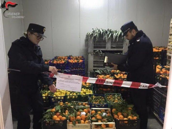 Lavoratore in nero e prodotti non tracciati al Comac di Montalto, sequestri e denunce