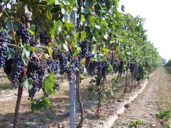 incontro-regione-viticoltori-assessore