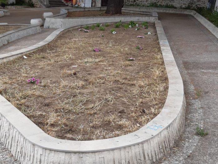 piante rubate Catanzaro