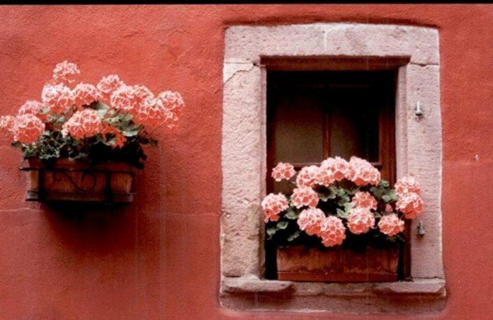 città in fiore cosenza