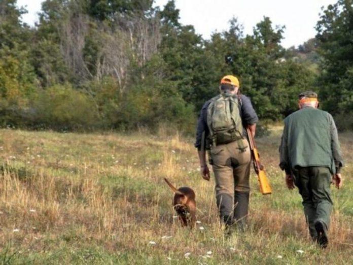 caccia cinghiali