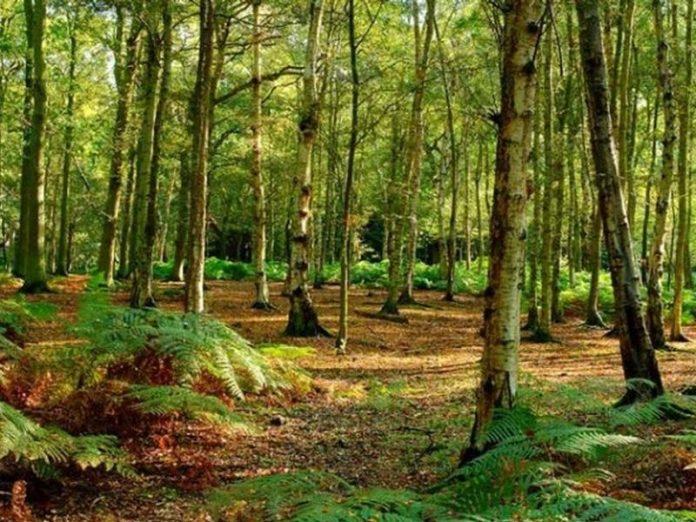 fondi forestazione calabria