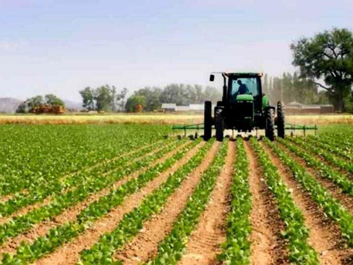 psr agricoltura sviluppo rurale