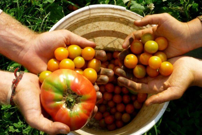 fondi per agricoltura biologica