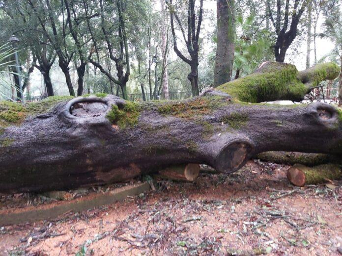 alberi tagliati villa vecchia Cosenza