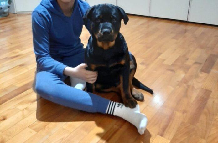 veterinari online