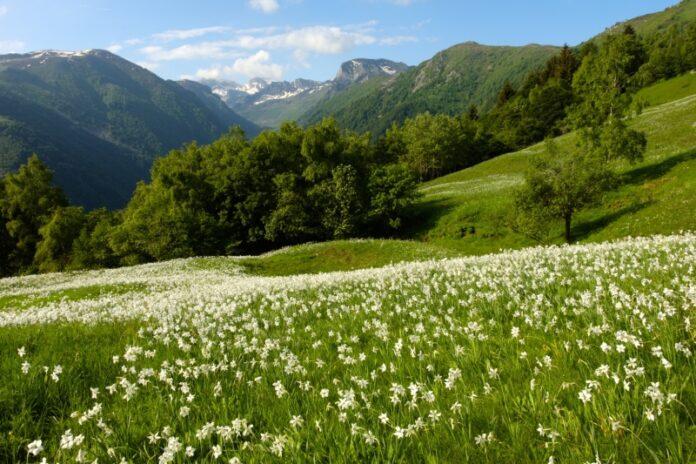 primavera anticipata Calabria