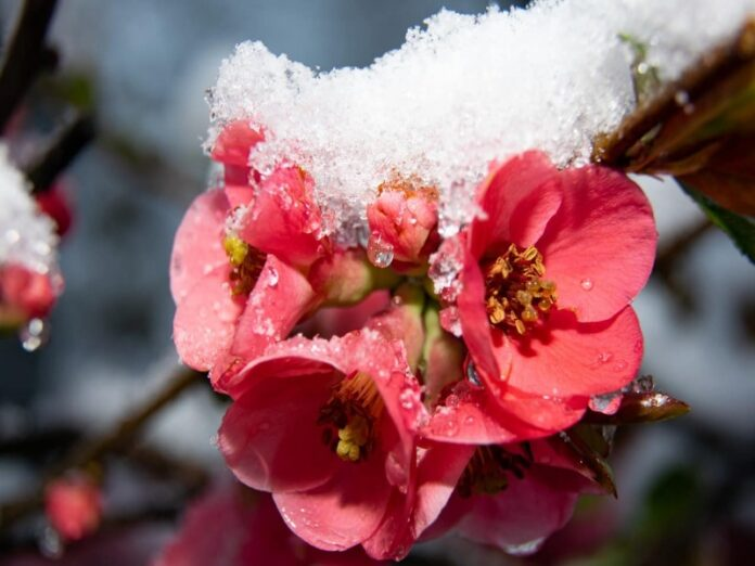 freddo primavera