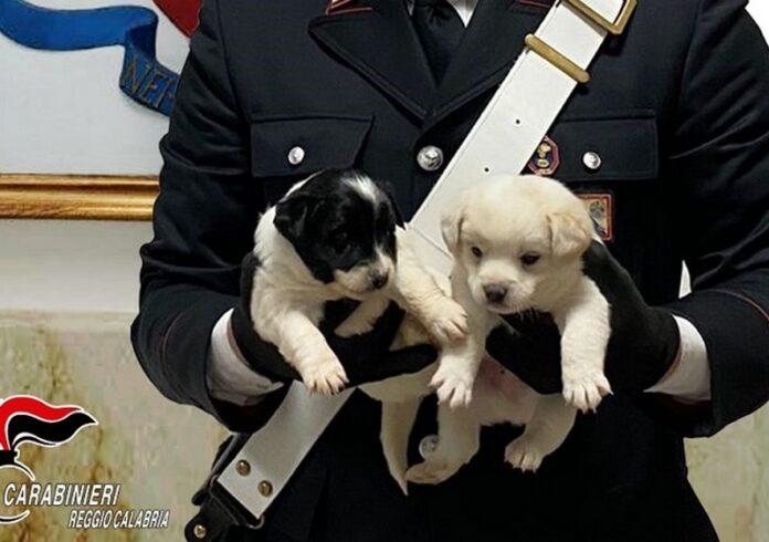 cuccioli cane salvati cc