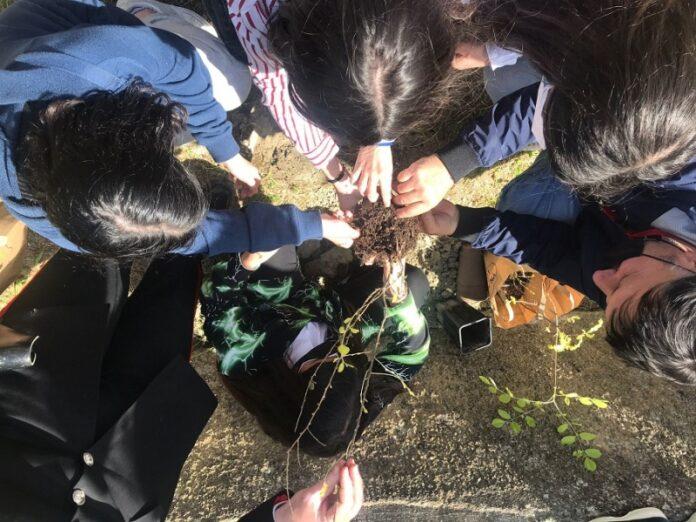 Mandatoriccio - Un albero per il futuro