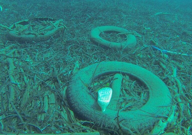 Praia a Mare, Guardia costiera bonifica fondali dell'Isola Dino