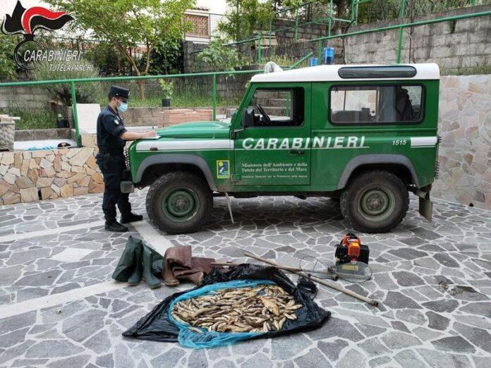 pesca illegale sequestro trote