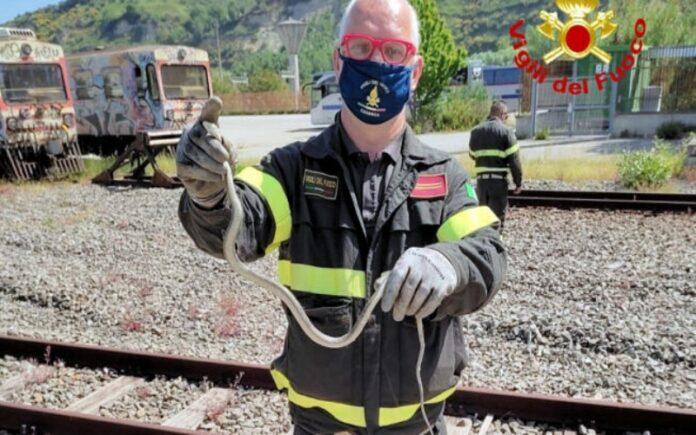 serpente in pullman ferrovie della calabria