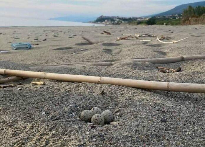 San Lucido uova uccello specie protetta