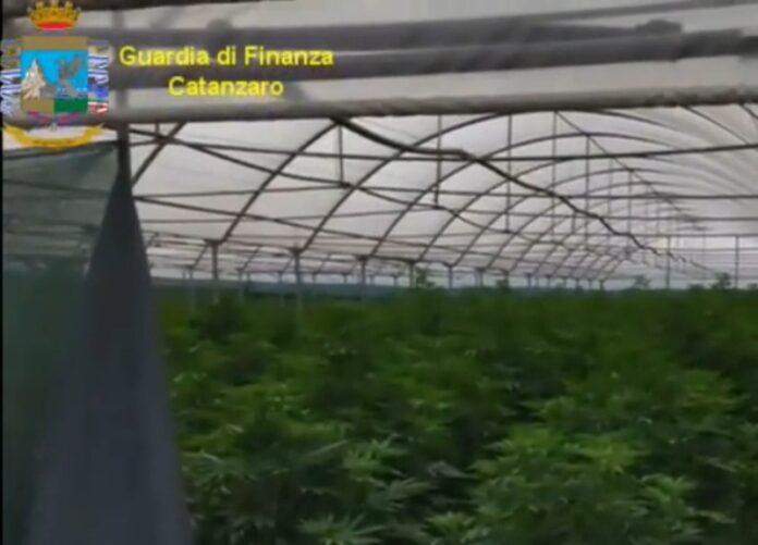 arresto coltivazione cannabis lamezia terme