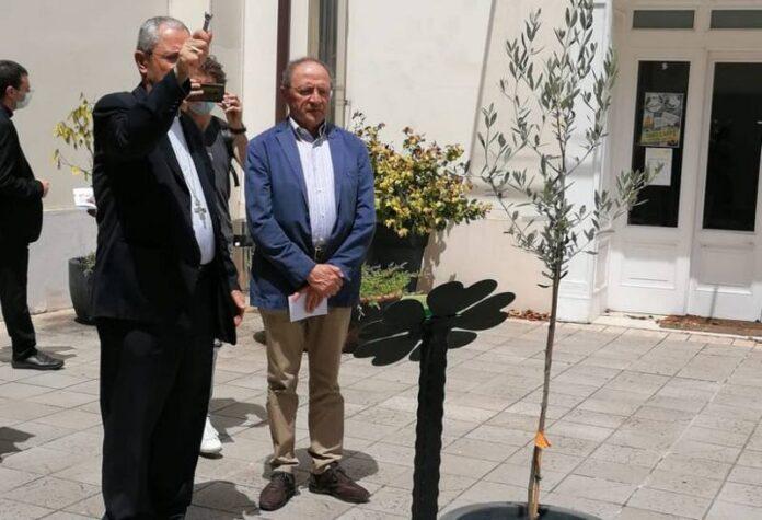 piantato albero ulivo cosenza covid