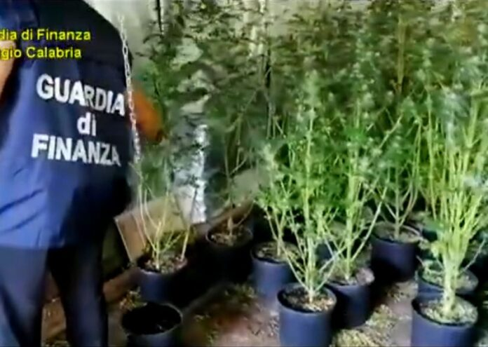 sequestro piante marijuana siderno