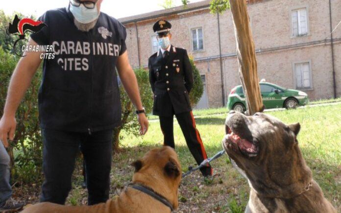 veterinari denunciati