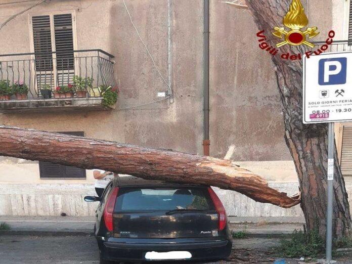 cade albero su auto vibo