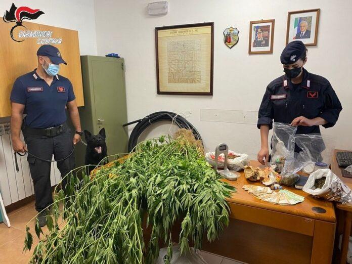Carabinieri scoprono coltivazione di marijuana
