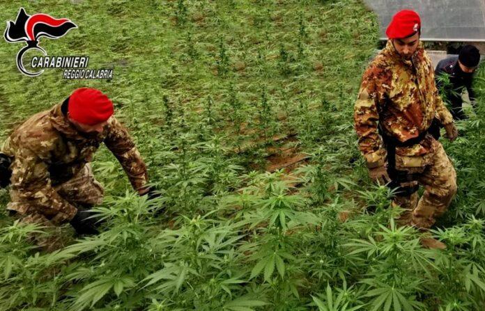 sequestro piantagione marijuana
