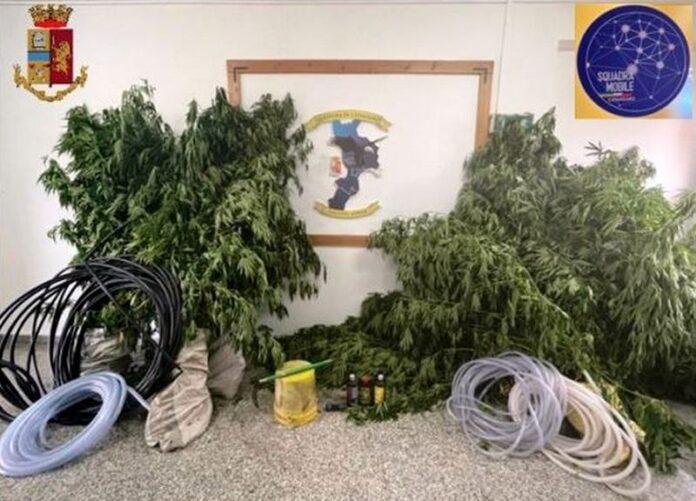 canapa marijuana catanzaro