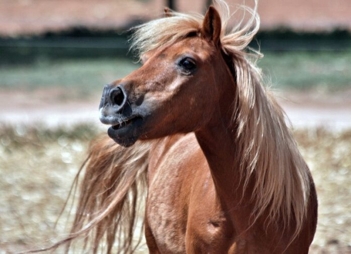vasi di marijuana nel recinto del pony