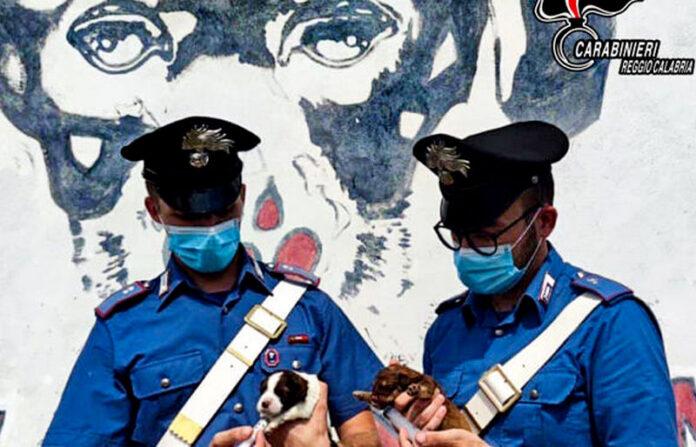 cuccioli cane salvati carabinieri brancaleone