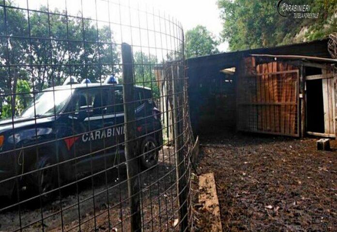 controlli carabinieri forestale cani
