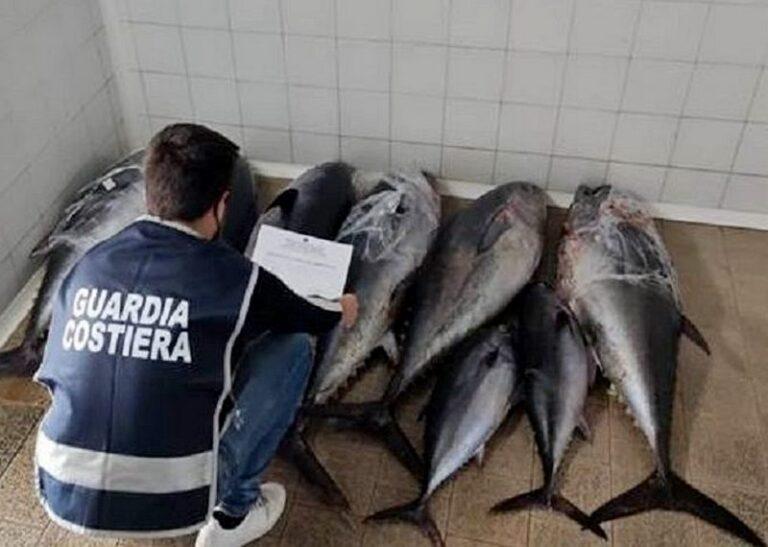 Fermato sulla statale 106 con 340 chili di tonno non certificato: sequestro e sanzioni